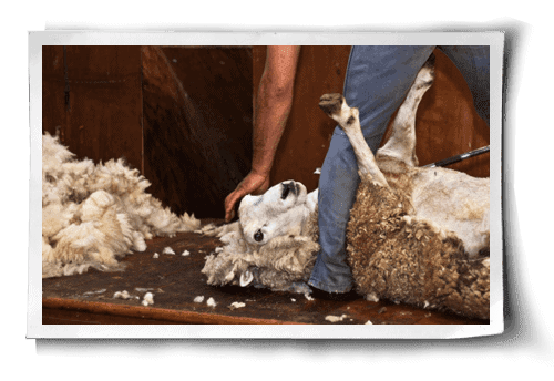 What's Wrong with Wool?