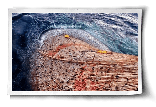 Commerical Fishing: Methods Behind the Madness post image