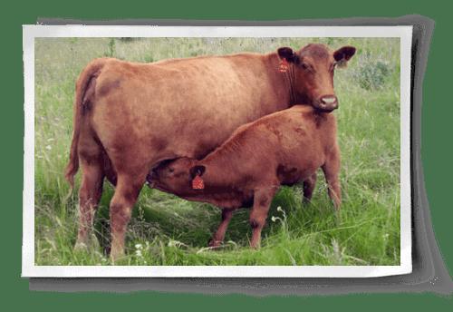 Mother's Milk post image