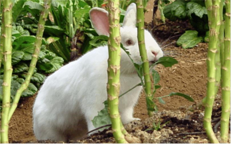The Magic Rabbit post image