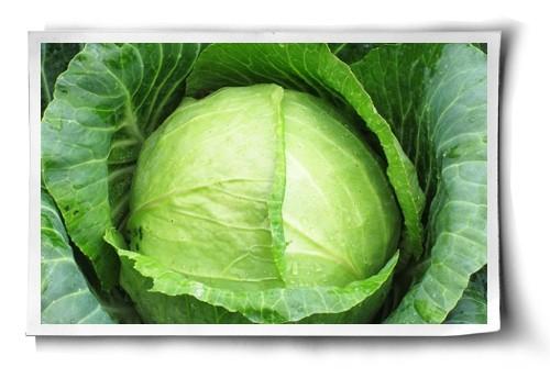Veganic Growing in Action post image